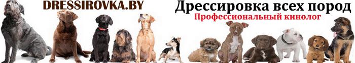 Выделение в каталоге_dressirovka.by