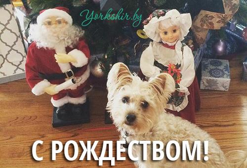 с рождеством православным 2016_